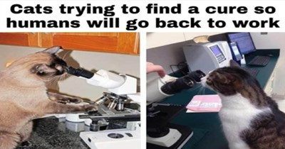 Fresh animal memes | Cats trying find cure so humans will go back work cat in laboratories looking into microscopes