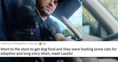 adopt adopted cats dogs aww cute love uplifting wholesome animals rescue shelter | Went to the store to get dog food and they were hosting some cats for adoption and long story short, meet Laszlo man in a car with a cat