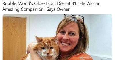 old Death cat photos Cats animals - 11915269