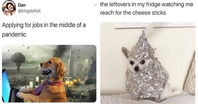 dogs doggo memes funny doggos meme lol aww cute animals | Dan @kingdeficit Applying jobs middle pandemic dog wearing a necktie using a laptop | leftovers my fridge watching reach cheese sticks tiny dog wrapped in aluminium foil