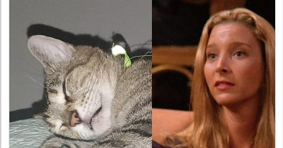 People Are Showing Off The Inspiration Behind Their Pet's Name | Nicks @frankylampy Replying BriggonSnow 42 Phoebe Buffay from Friends
