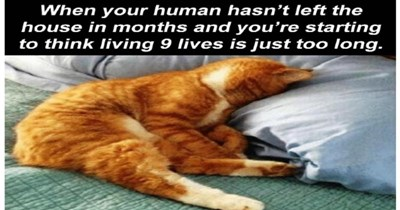 Fresh animal memes | human hasn't left house months and starting think living 9 lives is just too long. cat sleeping with its face in a pillow