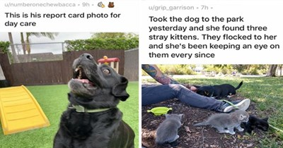 dogs cute funny wholesome uplifting aww lol adorable animals doggos dog pics | u/numberonechewbacca 9h This is his report card photo day care | u/grip_garrison 7h Took dog park yesterday and she found three stray kittens. They flocked her and she's been keeping an eye on them every since