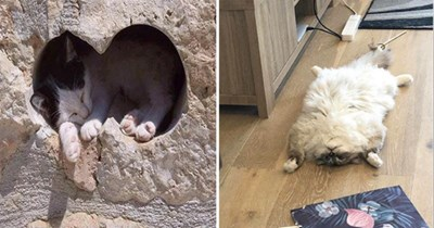 cats cat pics photos pictures aww cute funny adorable soothing calming relax animals | cat sleeping in a heart shaped hole in a wall | funny chonky cat sleeping spread eagle on its back looking like a rug