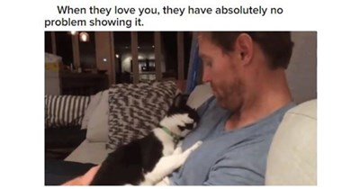 cats love loving animals reasons truth pets cat kittens kitties aww lovey dovey adorable   they love they have absolutely no problem showing man cradling a cat to his chest