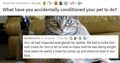 pets conditioning accident funny cats dogs reddit askreddit thread animals lol stories
