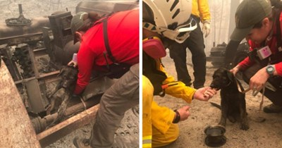 story about an adorable puppy who was rescued from the rubble of the California wildfires thumbnail includes two pictures including a black dirty puppy being picked up from the rubble and another with the puppy on the ground being fed a treat