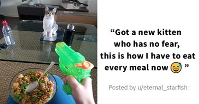 all the newly adopted rescue animals of the week - thumbnail of man protecting food with squirt gun from newly adopted kitten Got a new kitten who has no fear, this is how I have to eat every meal now