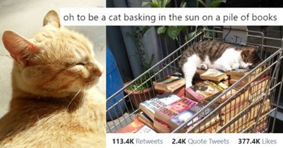 pictures and tweets of cats chilling in the sun thumbnail includes two pictures including a ginger cat with its eyes closed in the sunshine and a cat lying on a cart full of books 'Product - sam @faeryinchains oh to be a cat basking in the sun on a pile of books TL Исторические романы त 6:36 PM · Jun 26, 2020 · Twitter for iPhone REPO 113.4K Retweets 2.4K Quote Tweets 377.4K Likes'