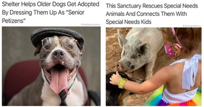 """wholesome animal headlines of 2020 - """"shelter helps older dogs get adopted by dressing them up as """"senior petizens"""""""" """"this sanctuary rescues special needs animals and connects them with special needs kids"""""""