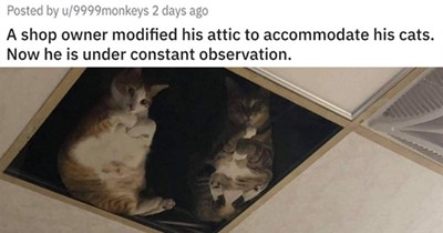 """pics and vids of the cutest animals of the week -  thumbnail of two cats in the ceiling looking down """"A shop owner modified his attic to accommodate his cats. Now he is under constant observation."""""""