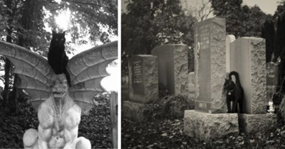 tumblr pictures of cats hanging out in graveyards for a Halloween spooktober special thumbnail includes two pictures including a cat sitting on a gremlin shaped grave and another cat hanging out between tombstones