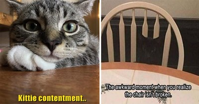 """original cat memes by i can has cheezburger users lolcats - thumbnail  includes two cat memes  one of a smiling happy cat""""kittie contentment"""" and a black cat sitting in a chair""""that awkward moment when you realize the chair isn't broken"""""""