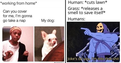 Funny random memes, dank memes, stupid memes, relatable memes, depressing memes | working home Can cover gonna go take nap My dog girlsthinkimfunn me explaining to my dog | Human cuts lawn Grass releases smell save itself Humans: Joke's on l'm into shit Skeletor