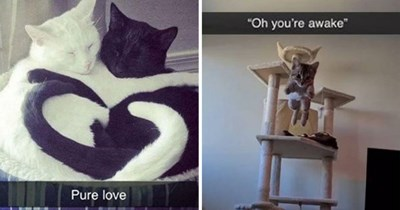"""fresh cat snaps - thumbnail includes two cat snaps - one of two cats cuddling, one white, one black """"pure love"""" and one of a cat jumping towards the camera """"Oh, you're awake"""""""