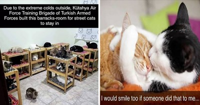 "fresh cat snaps - thumbnail includes two cat snaps - one of two cats cuddling ""i would smile too if someone did that to me"" and one of many cats under some shelter and with bunkbeds ""Due to the extreme colds outside, Kütahya Air Force Training Brigade of Turkish Armed Forces built this barracks-room for street cats to stay in"""