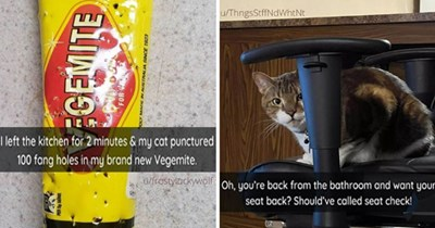 "fresh cat snaps - thumbnail includes two images - one of vegemite ""I left the kitchen for 2 minutes & my cat punctured 100 fang holes in my brand new Vegemite."" cat in a chair ""Oh, you're back from the bathroom and want your seat back? Should've called seat check!"""