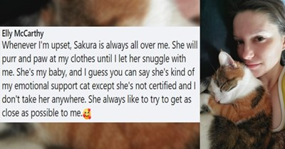 Facebook comment about ways in which pets show their owners they love them thumbnail includes one picture of a cat cuddling a girl 'Facial expression - Elly McCarthy Whenever I'm upset, Sakura is always all over me. She will purr and paw at my clothes until I let her snuggle with me. She's my baby, and I guess you can say she's kind of my emotional support cat except she's not certified and I don't take her anywhere. She always like to try to get as close as possible to me. OD 156'
