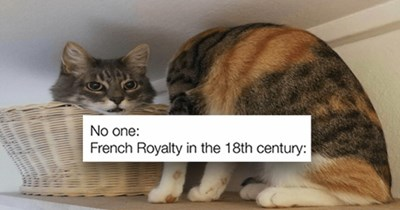 "fresh cat memes - thumbnail includes two images - thumbnail of two cats ""No one: French Royalty in the 18th century"""