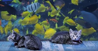 aww adopt adorable kitten aquarium tour fish Cats animals - 1390086