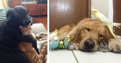 15 animal friendships that aren't unexpected