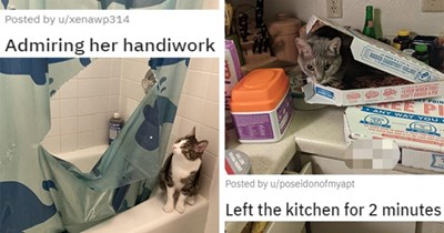 reddit posts of cats being jerks thumbnail includes two pictures including a cat looking at a ripped shower curtain 'Admiring her handiwork u/xenawp314' and another of a cat inside of a pizza box 'Left the kitchen for 2 minutes u/poseidonofmyapt'