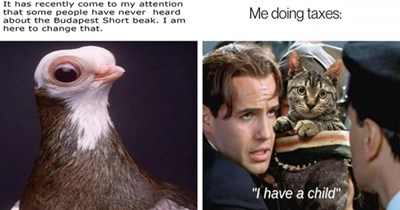 """list of funny and fresh animal memes thumbnail includes two memes including a picture of a Budapest Short beak bird 'Bird - It has recently come to my attention that some people have never heard about the Budapest Short beak. I am here to change that.' and a man holding a cat 'Cat - Me doing taxes: """"I have a child""""'"""