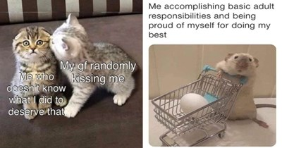 collection of wholesome animal memes thumbnail includes two memes including a cat kissing another cat 'Cat - My gf randomly kissing me Me who doesn't know what I did to deserve that' and a hamster with an egg in a tiny shopping cart 'Product - Me accomplishing basic adult responsibilities and being proud of myself for doing my best'