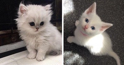 cute photos of white kittens