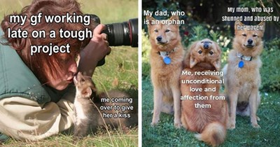 collection of wholesome animal memes thumbnail includes two memes including three dogs with one dog looking upside down '' and another of a photographer kissing a ferret ''