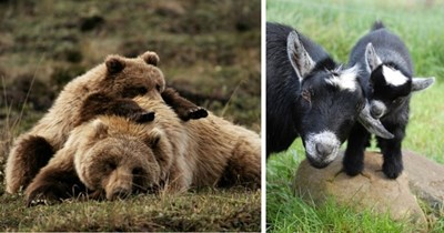 11 pictures of animal mothers and their babies