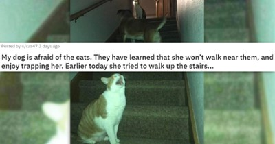 Reddit posts about cats being jerks | thumbnail includes a picture of two cats trapping a dog up the stairs with one cat laughing maniacally 'My dog is afraid of the cats. They have learned that she won't walk near them, and enjoy trapping her. Earlier today she tried to walk up the stairs... u/cas47'