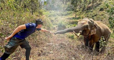 10 images of elephants | thumbnail elephant and vet touching hand and trunk