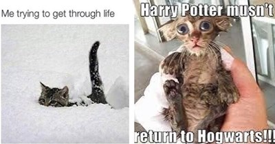 """37 cat memes list 