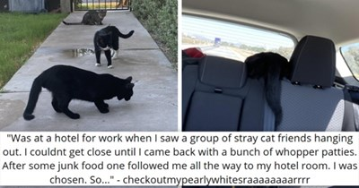 imgur thread about a feral cat adopting a human | thumbnail includes two pictures includes one of three feral cats and another of a cat sitting in a funny way in a car 'Was at a hotel for work when I saw a group of stray cat friends hanging out. I couldnt get close until I came back with a bunch of whopper patties. After some junk food one followed me all the way to my hotel room. I was chosen. So checkoutmypearlywhitesraaaaaaaarrrr'