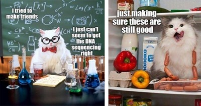 20 cat memes   thumbnail left cat scientist meme, thumbnail right just making sure these are still good cat in fridge meme