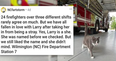 a collection of posts about cats | thumbnail includes a picture of a cat walking in front of a fire truck '24 firefighters over three different shifts rarely agree on much. But we have all fallen in love with Larry after taking her in from being a stray. Yes, Larry is a she. She was named before we checked. But we still liked the name and she didn't mind. Wilmington (NC) Fire Department Station 7 u/NCfartstorm'