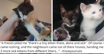 """viral imgur thread about four sick and injured kittens getting rescued   thumbnail includes two pictures of sick and injured kittens 'A friend called me """"there's a tiny kitten there, alone and sick"""". Of course I came rushing, and the neighbours came out of there houses, handing me 3 more sick kittens from different litters... Knowyourcats'"""