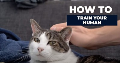 guide HOW TO TRAIN YOUR HUMAN video cat being petted