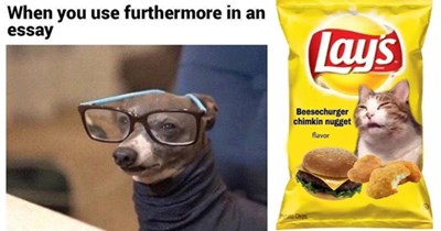 """28 cat and dog memes 
