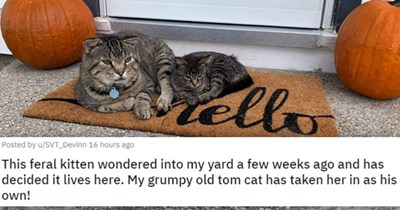 posts of animals newly adopted this week | thumbnail includes a picture of a cat lying next to a kitten 'This feral kitten wondered into my yard a few weeks ago and has decided it lives here. My grumpy old tom cat has taken her in as his own! u/SVT_Devinn'