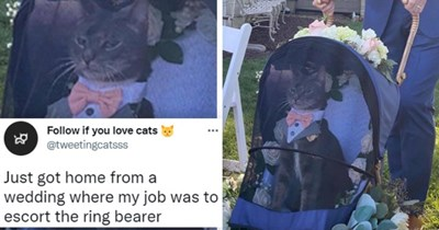 Twitter thread about two adorable cats who were the ringbearer and flower girl in a wedding, thumbnail includes two photos of a cat in a stroller with the captions 'Home from a wedding where my job was to escort the ringbearer' and 'speak meow of forever hold your peace'