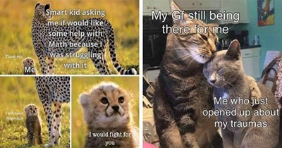 collection of wholesome animal memes | thumbnail includes two memes including a cheetah and a cheetah cub 'Plant - Smart kid asking me if would like some help with Math because I was struggling with it Thank you Me I will never forget this I would fight for you' and two cats hugging 'Cat - My Gf still being there for me Me who just opened up about my traumas'