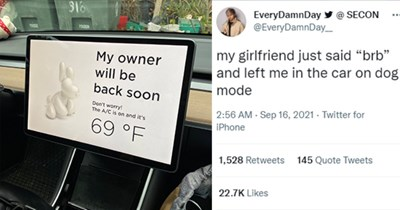 """13 animal tweet images   thumbnail left car left on dog mode with tweet text """" my girlfriend just said """"brb"""" and left me in the car on dog mode S16 My owner will be back soon Don't worry! The A/C is on and it's 69 °"""""""