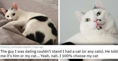 a collection of posts about cats | thumbnail includes two pictures of a black and white cat 'The guy I was dating couldn't stand I had a cat (or any cats). He told me it's him or my cat... Yeah, nah. I 100% choose my cat u/shutupknobgoblin'