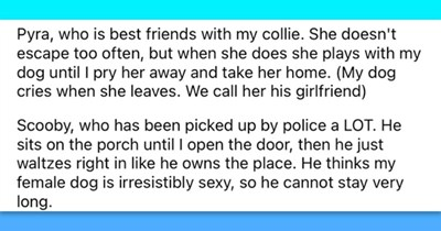 """16 images and text based images on neighborhood dogs 