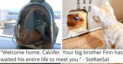 viral imgur thread about a dog and a newly adopted kitten becoming best friends | thumbnail includes two pictures including a cat in a carry bag and a dog sniffing a kitten through a door 'Welcome home, Calcifer. Your big brother Finn has waited his entire life to meet you SteRaeSal'