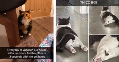 """12 cat snaps 