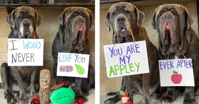 list of cute dogs wearing funny pick up lines around their necks on signs | thumbnail includes photos of dogs with thumbnails saying 'you are my apple ever after' and 'I would never leaf you'