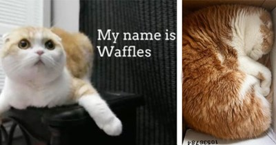 """13 videos and images of waffles the cat 